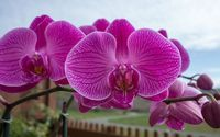 Purple orchid [2] wallpaper 1920x1200 jpg