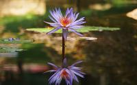 Purple water lily [2] wallpaper 3840x2160 jpg