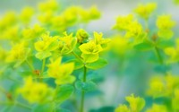 Rapeseed wallpaper 2880x1800 jpg