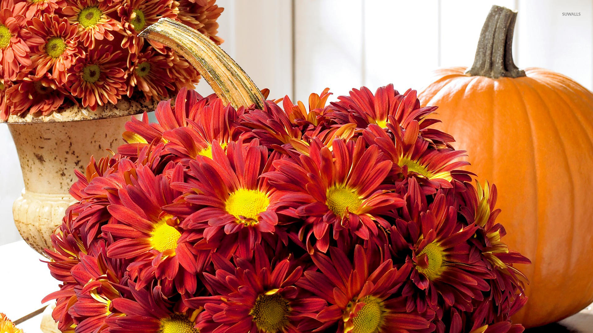 group of pumpkins with autumn flower wallpaper