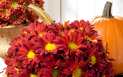 Red chrysanthemum and a pumpkin wallpaper