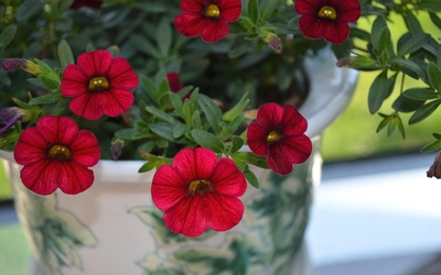 Red petunias wallpaper
