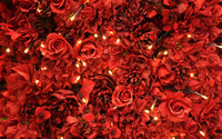 Red roses [7] wallpaper 2560x1600 jpg