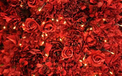 Red roses [7] wallpaper