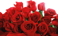 Red Roses wallpaper 1920x1200 jpg
