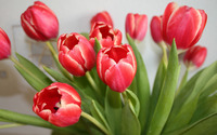 Red tulips [3] wallpaper 2880x1800 jpg