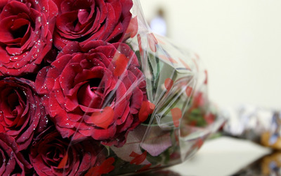 Red velvet rose bouquet wallpaper