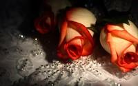 Roses [9] wallpaper 2560x1600 jpg