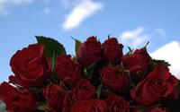 Roses [15] wallpaper 1920x1200 jpg
