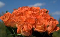 Roses [14] wallpaper 1920x1200 jpg