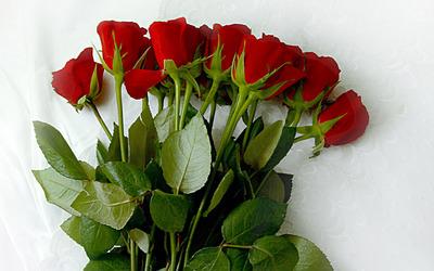 Roses [7] wallpaper