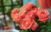 Roses [18] wallpaper 2560x1600 jpg