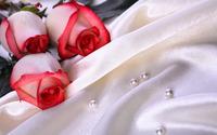 Roses [6] wallpaper 2560x1600 jpg