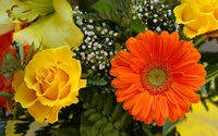 Roses and Gerbera wallpaper 1920x1200 jpg