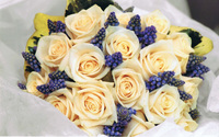 Roses and Grape Hyacinth Bouquet wallpaper 2560x1600 jpg