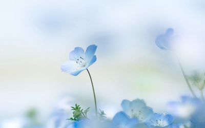 Small blue flower wallpaper
