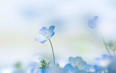 Small blue flower Wallpaper