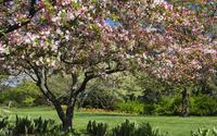 Spring blossomed tree wallpaper 1920x1200 jpg