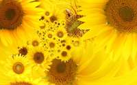 Sunflowers [21] wallpaper 1920x1080 jpg