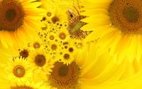 Sunflowers [21] wallpaper 1920x1080 jpg