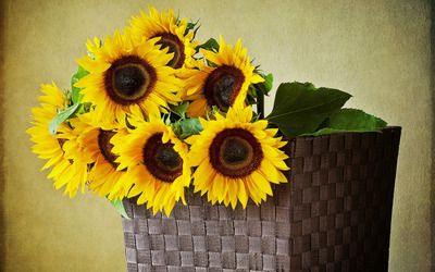 Sunflowers in a basket wallpaper