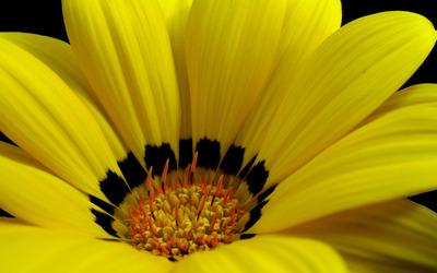 Superb yellow flower wallpaper