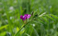 Vetch wallpaper 2880x1800 jpg