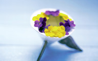Violets [2] wallpaper 1920x1200 jpg