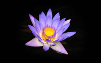 Water lily [9] wallpaper 2560x1600 jpg