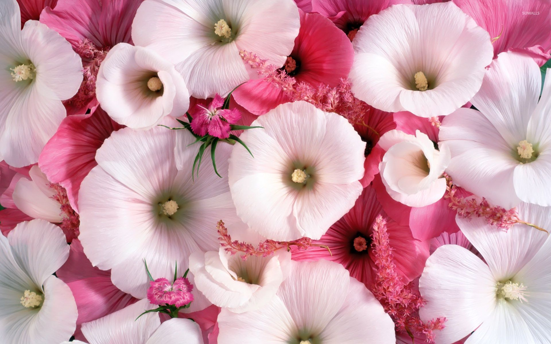 White and pink hollyhocks wallpaper - Flower wallpapers ...