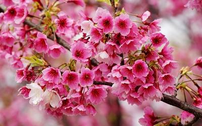 Wonderful spring blossoms wallpaper