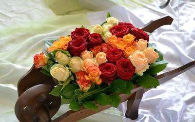 Wooden wheelbarrow full of roses wallpaper