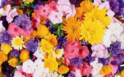Yellow and pink flowers wallpaper
