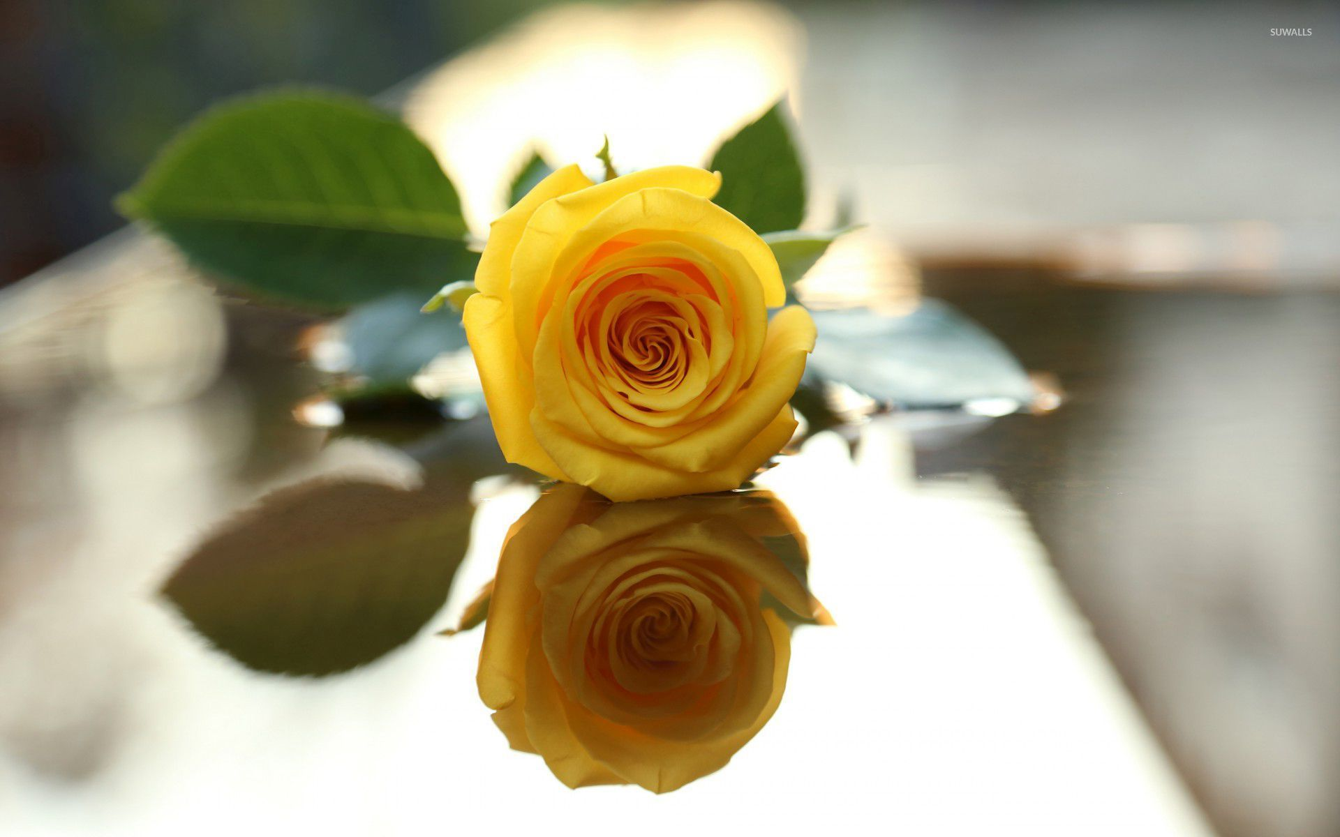 yellow rose [3] wallpaper - flower wallpapers - #33592
