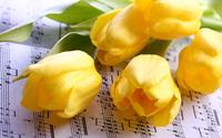 Yellow tulips [6] wallpaper 1920x1200 jpg