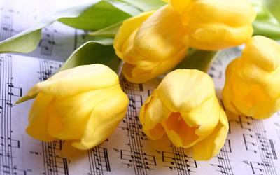 Yellow tulips [6] wallpaper