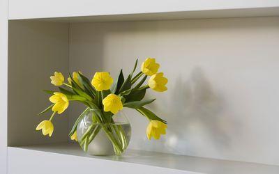 Yellow tulips [7] wallpaper