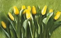 Yellow tulips [3] wallpaper 1920x1200 jpg
