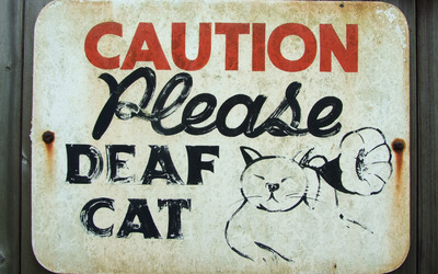 Caution deaf cat wallpaper