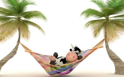Cow in hammock wallpaper