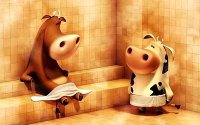 Cows in the sauna wallpaper