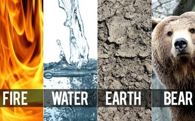Fire, water, earth, bear wallpaper