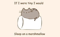 I would sleep on a marshmallow wallpaper 1920x1080 jpg