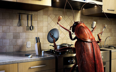 Insect cooking wallpaper