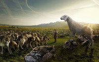 Sheep attacking the wolves wallpaper 1920x1080 jpg