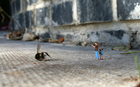 Toys killed the bee wallpaper 2560x1600 jpg