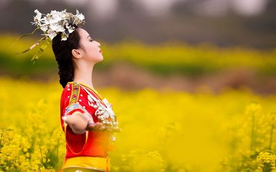 Geisha in the rapeseed field wallpaper