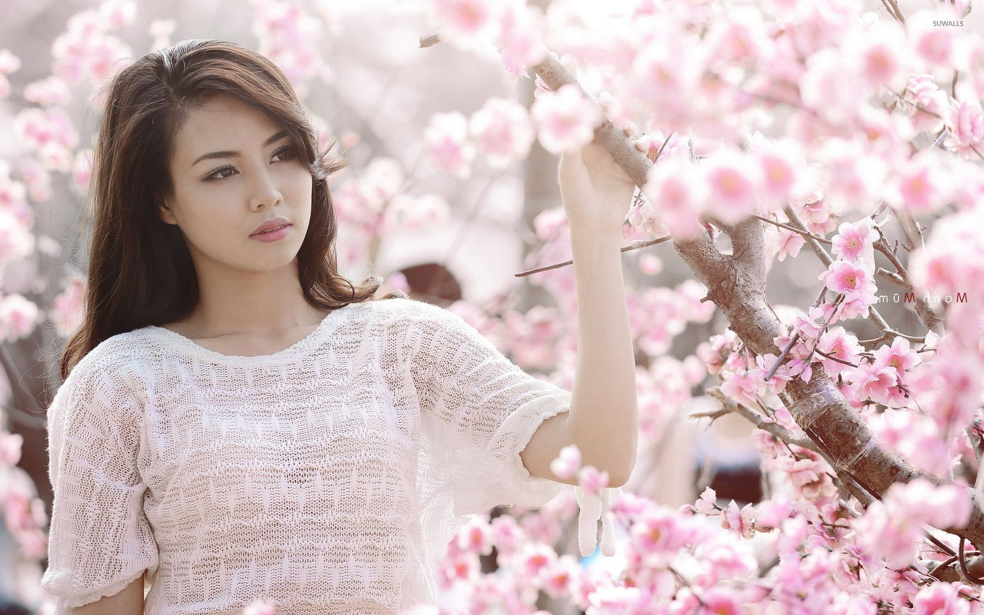 cherry tree single women Cherry blossoms is the oldest and one of the largest international social  networking companies in the world today it was established in 1974 as a picture  catalog specializing in women from.