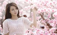 Girl among cherry blossoms wallpaper 1920x1200 jpg