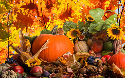Autumn harvest wallpaper